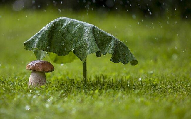 ETSN: Şimal rayonlarına yağış yağacaq, çaylarda daşqın, sel olacaq